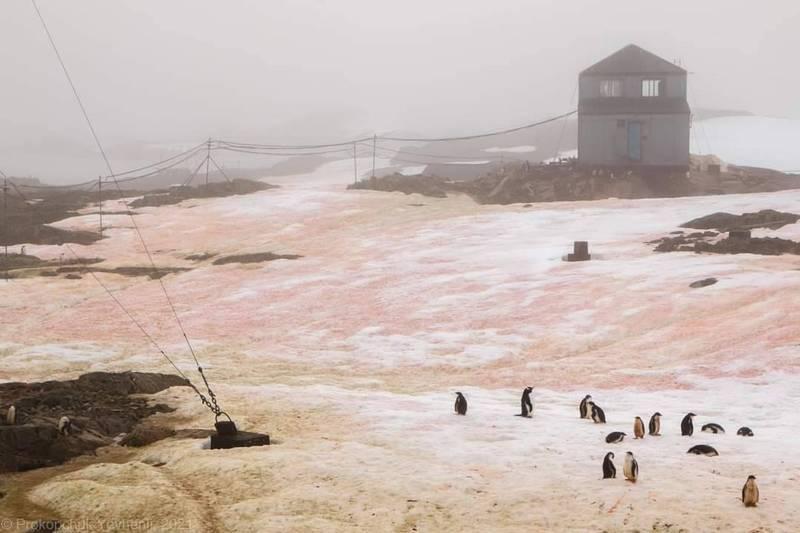 烏克蘭科研團隊發現南極冰雪出現紅色與綠色的景象。(圖取自Національний антарктичний науковий центр Анна Soyna)