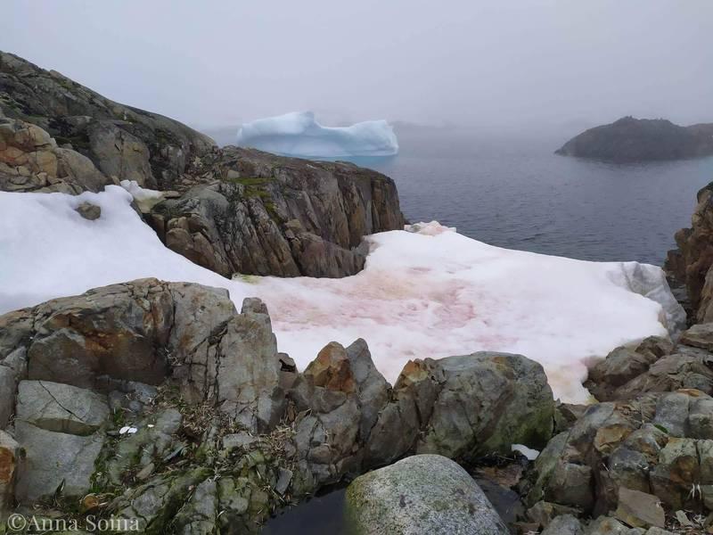 劍橋大學提出一項聯合研究,要透過衛星確定南極的夏季有哪些地區的冰雪會出現顏色。(圖取自Національний антарктичний науковий центр Анна Soyna)