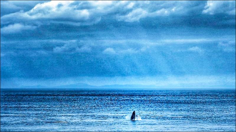 蘭嶼椰油灘頭海域昨上午出現一對大翅鯨,距離之近,當地居民在家就能「賞鯨」大飽眼福。(圖:顏子矞提供)