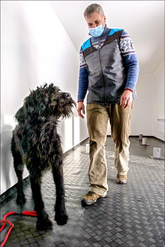 訓練過的狗能偵測武肺病毒,成功率達95%。(法新社)