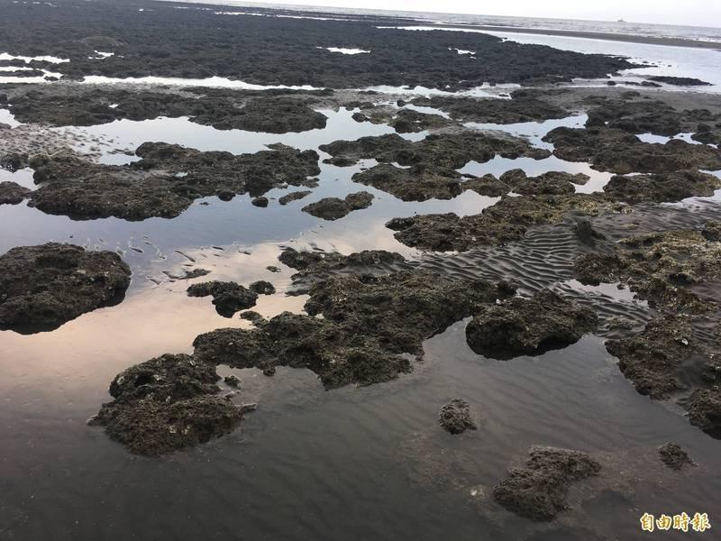 藻礁公投連署破10萬 環團批中油誤導大眾