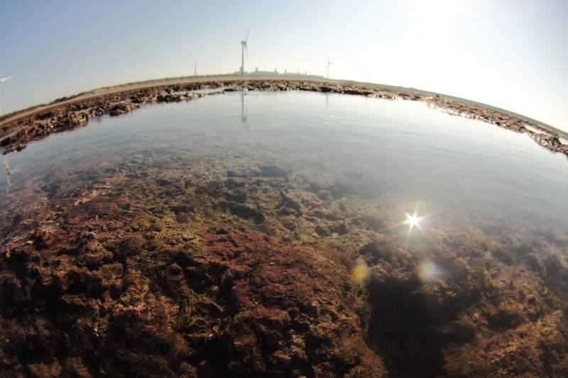 為搶救大潭藻礁,國民黨智庫今指出目前反對天然氣接收站興建計畫的公投連署書尚缺少25萬份,該智庫已邀請藍營立委共同為大潭藻礁盡力,呼籲民眾共同守護粉紅藻礁。(資料照)