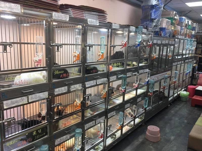 台北市動保處提醒今年度有不少特定寵物(犬貓)業者的許可證即將到期,若未在期限內完成許可證換發程序,繼續販賣犬貓,可依動保法處10萬元到300萬元的罰鍰。(資料照,北市法務局提供)