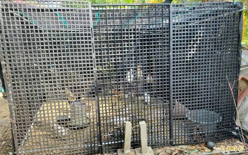 南投蕭姓農友將雞舍更改為塑鋼材質防範流浪犬來襲。(記者謝介裕攝)