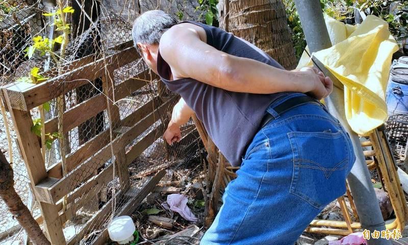 南投蕭姓農友指流浪犬破壞棧板及網子入侵雞舍情形。(記者謝介裕攝)