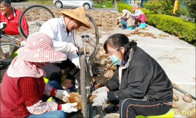 金陵村農將腳踏車變身農機具,利用車輪的輻條鋼「脫子」。(記者劉曉欣攝)