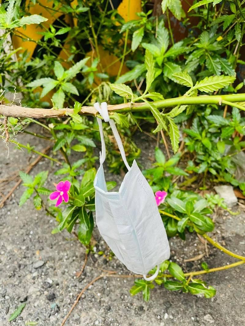 彰化縣議員賴清美要撿地上的口罩,才發現竟然是「綁」在小草上,最後只能拔小草,連同口罩一起丟掉。(記者劉曉欣翻攝)