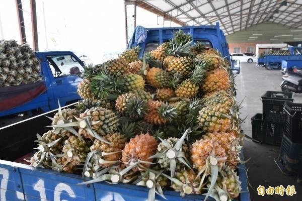 中國3月起暫緩台灣鳳梨出口,並稱是因為台灣鳳梨有「檢疫性有害生物」,出口業者表示這明顯是因為政治問題找的藉口。(資料照)