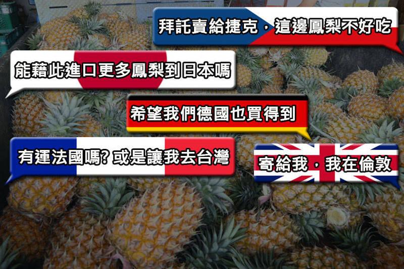 中国26日突宣布台湾凤梨有病虫害问题,从3月1日暂停进口,各国网友直唿希望进口台产凤梨到自己国家。(示意图,本报后制)(photo:LTN)