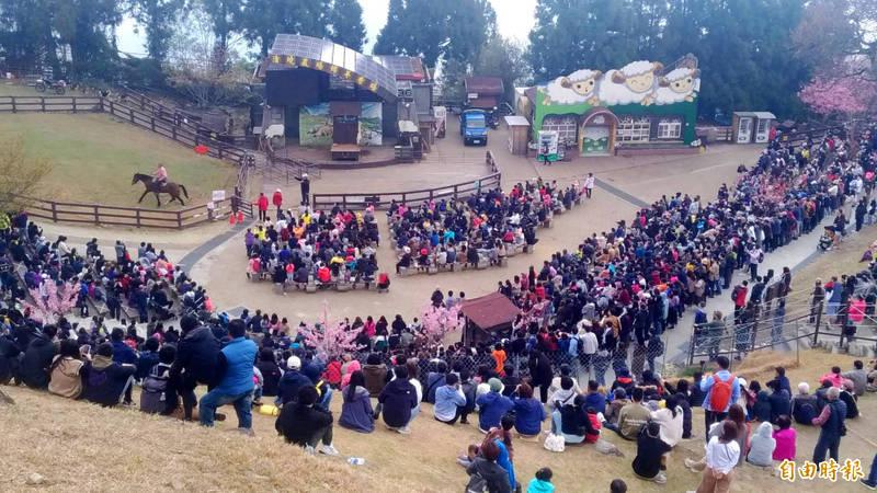 清境農場青青草原的綿羊秀表演時間,三面看台坐滿遊客。(記者陳鳳麗攝)