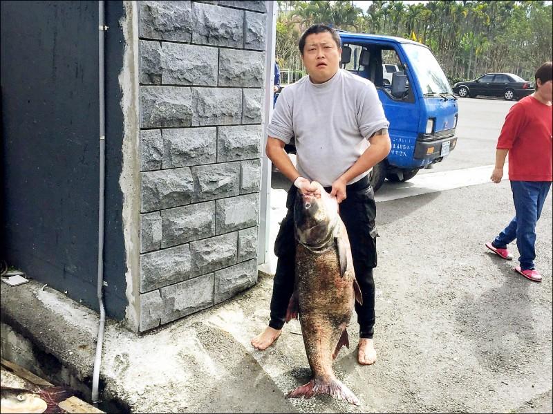 有漁民捕獲重逾五十台斤的大頭鰱,堪稱潭區捕過最大的「鰱魚王」。(連家毅提供)
