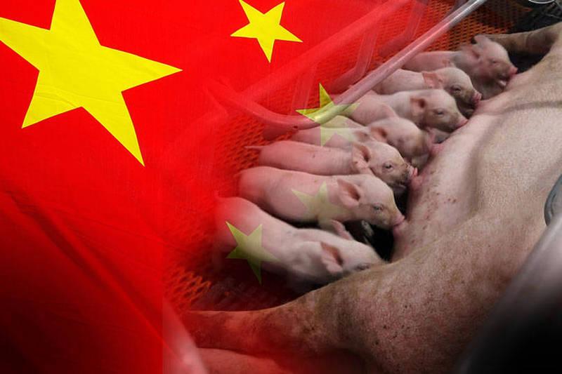 根據中國農業科學院的最新研究顯示,中國部分省份出現低致死率的非洲豬瘟基因II型自然變異流行株,雖然致病力較典型強毒株明顯降低,但有很強的傳播能力,且早期診斷難度增大。(五星旗照美聯社,豬隻照路透,本報合成)