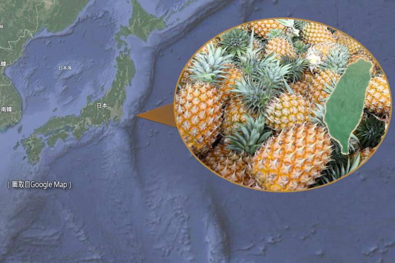 屏東縣是鳳梨主要產地,今年外銷日本的第一個貨櫃今天(27日)封櫃啟航。(本報合成)