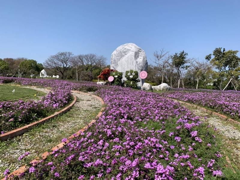 后里的環保公園,目前波斯菊、馬櫻丹雙色花海綻放中。(市府提供)
