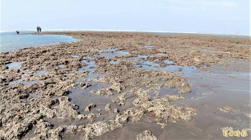 大潭藻礁區。(記者鄭淑婷攝)
