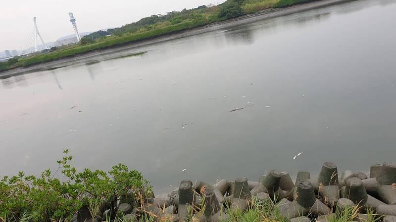 基隆河水面出現翻肚死魚。(民眾提供)