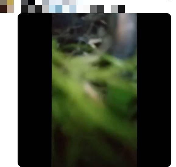影片拍攝者中槍後倒下的拍攝畫面。(圖擷取自推特)