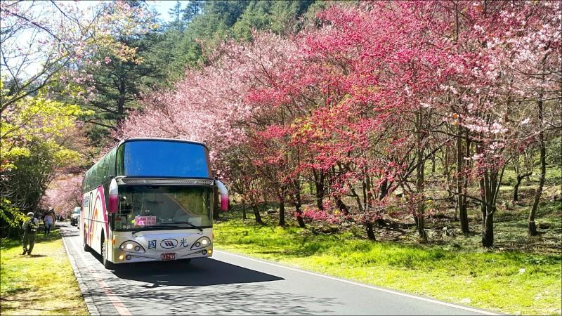 武陵賞櫻專車台北來回票價,擬漲至850元。(資料照)