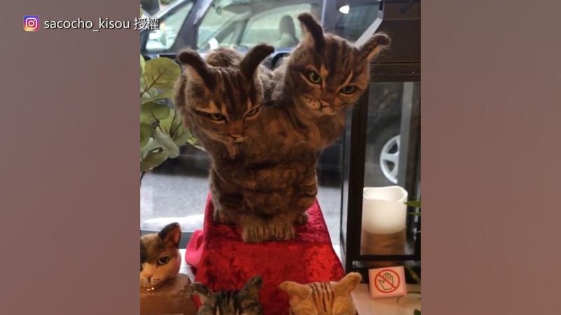 推主致力於做出世界上不存在的貓咪。(圖片由Instagram帳號sacocho_kisou 授權提供使用)