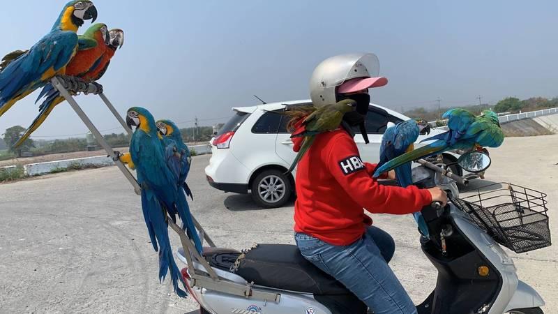 依藤用機車載著鸚鵡兜風,相當拉風吸睛。(讀者提供)