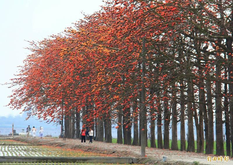 竹塘鄉公所公開木棉道秘境,google定位就在「竹塘水神樹公」旁。(記者陳冠備攝)