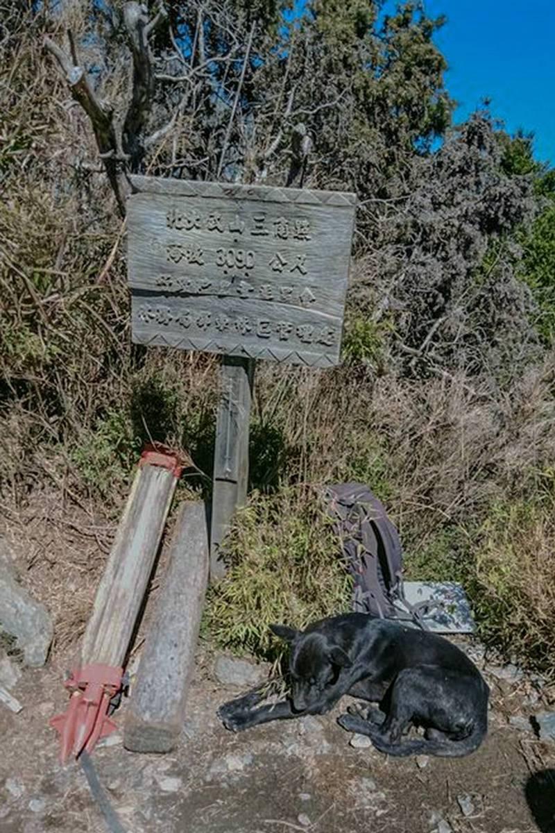 北大武嚮導神犬由「小黑」接班,莊主籲別再餵食。(大武山檜谷山莊莊主吳德發提供)