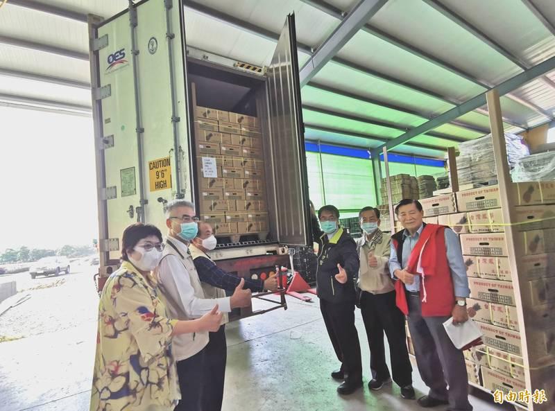 本土鳳梨在台南楠西集貨,外銷新加坡。(記者吳俊鋒攝)