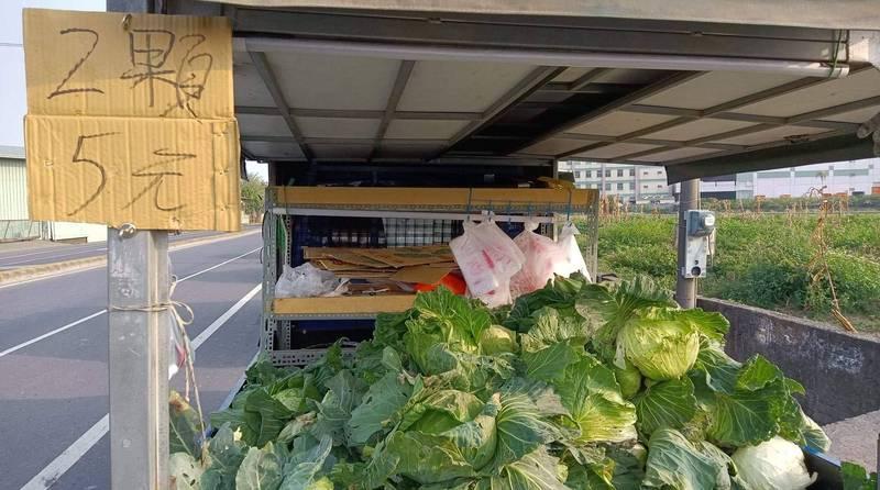 有菜農在路邊賣高麗菜「2顆5元」超低價,讓住台北的網友感到訝異。(圖取自爆廢公社)