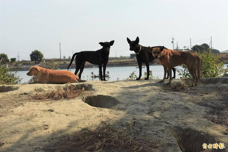 3隻狗對峙追逐撞死人,2飼主被判刑。示意圖,與本新聞無關。