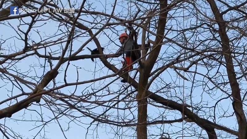 Erick Baker準備把貓咪帶下樹。(Facebook Robin Lee L AW 授權)