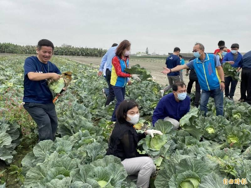 炳翰機構認購50噸約50萬元高麗菜,將轉送各地社福團體傳播愛心。(記者詹士弘攝)