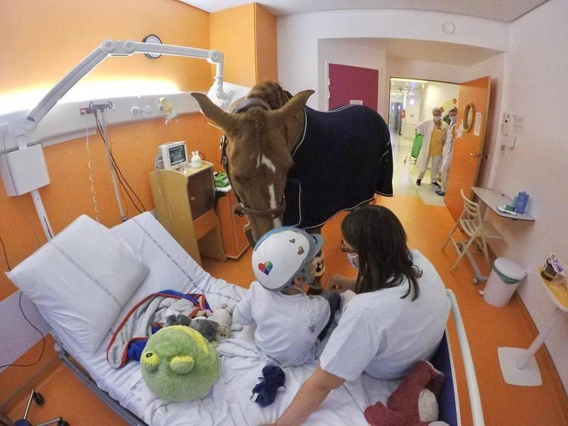 法國一隻馬被稱為「Dr.Peyo」,牠擅於陪伴病人,給他們安慰。(圖擷取自Les Sabots Du Coeur臉書)