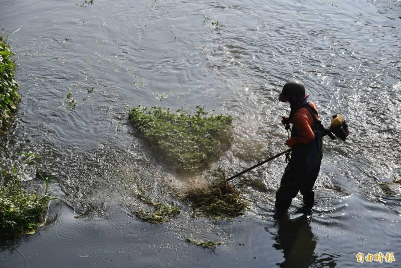 清潔人員用割草機在萬年溪河川割草清理。(記者葉永騫攝)