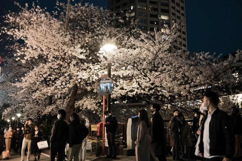 東京民眾昨天在目黑川附近賞花。昨天日本單日確診再突破2000人,是自上月7日以來新高。(彭博)