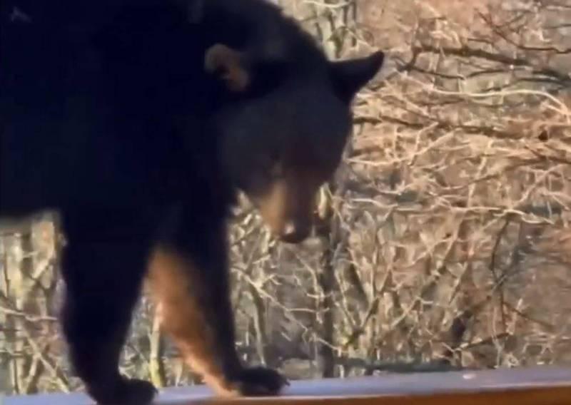黑熊起初先在露臺的欄杆上行走,疑似是想覓食。(圖翻攝自CAUGHT ON VIDEO DAILY個人YouTube)