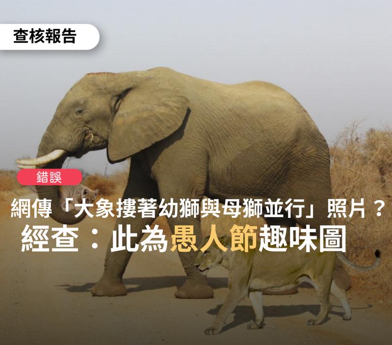 近日網傳照片稱「大象鼻子摟住幼獅,將幼獅送到水邊,母獅一旁陪伴同行。人類叫他們野獸?」,台灣事實查核中心(TFC)查驗後證實,皆為假消息。(圖擷取自《TFC 台灣事實查核中心》)
