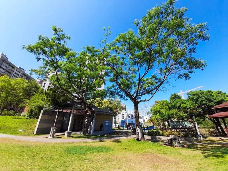 北屯區敦化公園的苦楝樹盛開。(記者蔡淑媛翻攝)