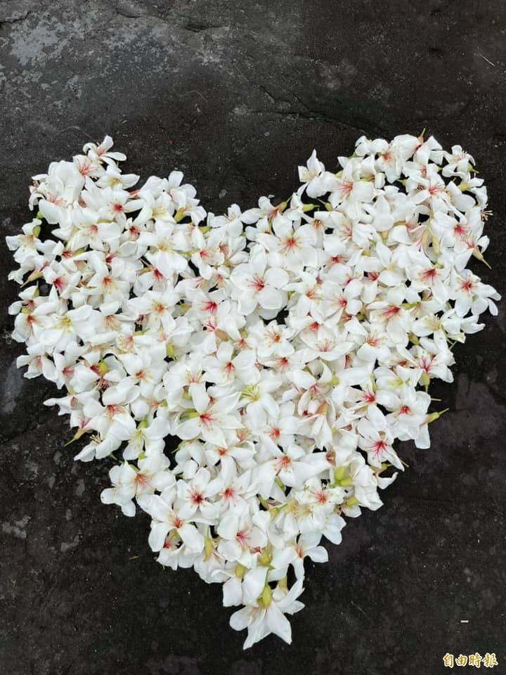 遊客收集樹下飄落的桐花在石桌上排了一個大愛心大拍網美照。(張几文提供)