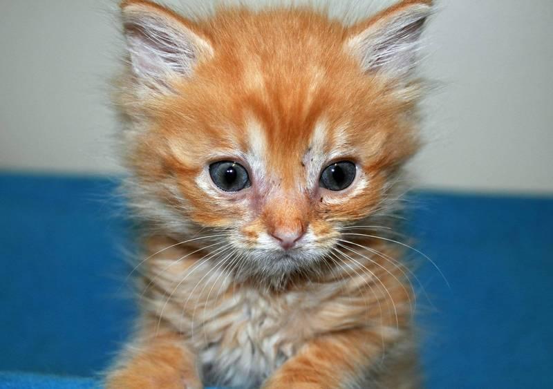 土耳其有隻母貓,居然主動到獸醫院求診,醫院將監視器畫面公開,讓網友們直呼太不思議。(示意圖,美聯社)