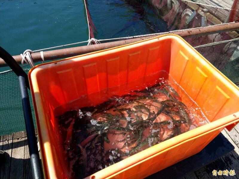 為防止日月潭因外來魚種入侵影響漁業與生態,南投縣政府限制放生期間只能在每年9至11月共3個月進行。(記者劉濱銓攝)