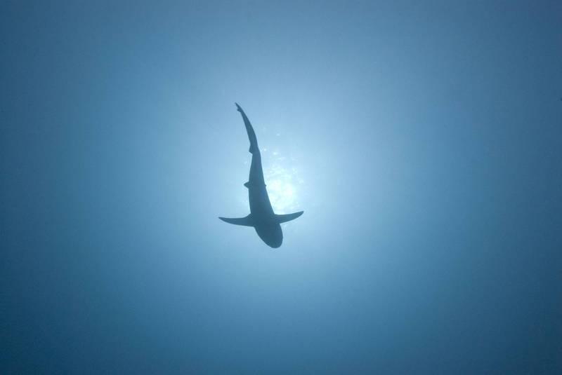 水溫變暖促使數萬個海洋物種從赤道往南北兩極方向遷移。(法新社)