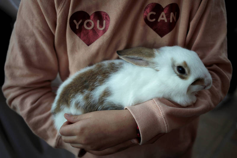 當局近期決定在該監獄設立一個可愛動物園,讓囚犯可以藉著親近兔子、沙鼠等寵物來體悟心靈祥和。(路透)