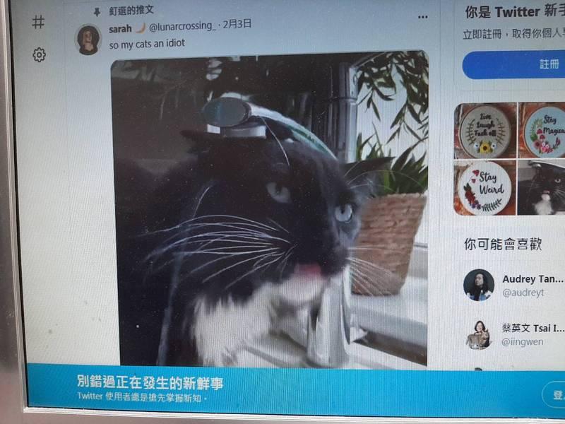 英國網友表示,自己的貓在喝水時找不到水,不斷的在「空舔」,甚至還一直拿頭去接水。(圖翻攝推特「@lunarcrossing_」)