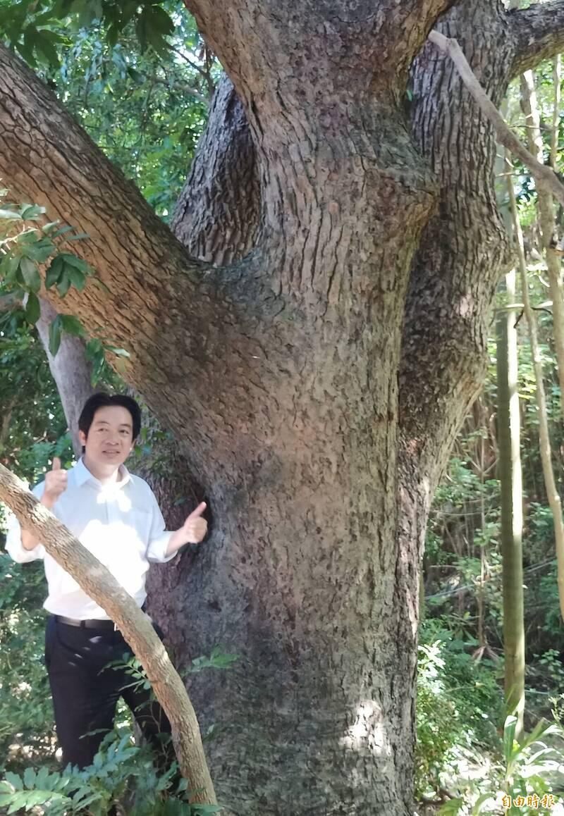哈赫拿爾森林百年老樟樹 議員籲台南市府提報保護