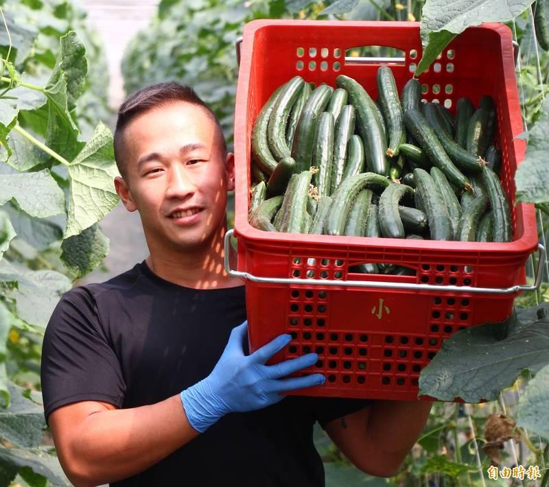 衝浪型男廚師返鄉當青農 種出硬挺清脆可口小黃瓜