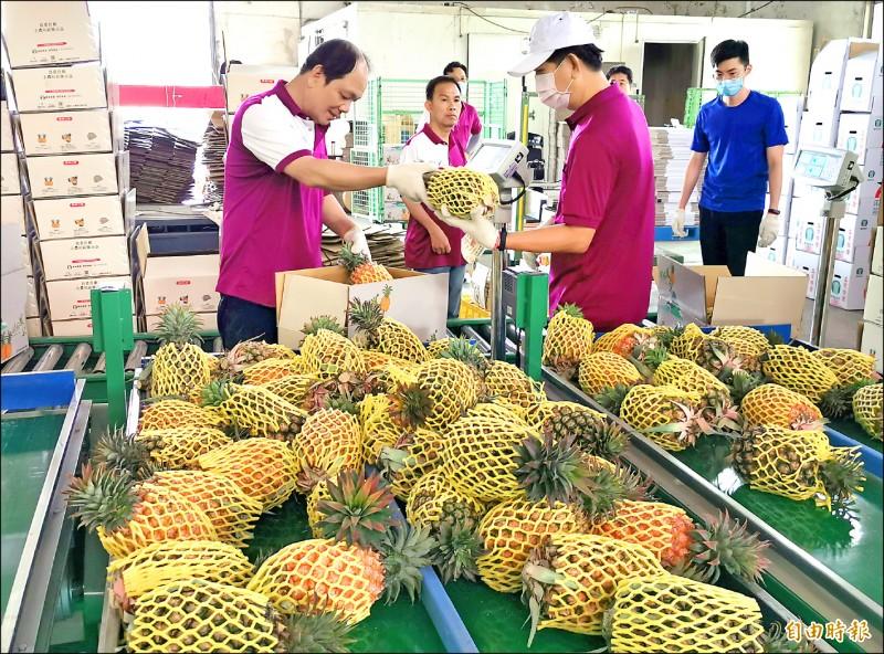 關廟區農會接獲的鳳梨訂單爆量,<b><a href=