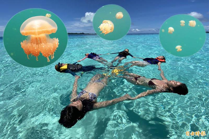 帛琉釋利多!鬆綁航班7成上限 參訪水母湖每人補助25美元