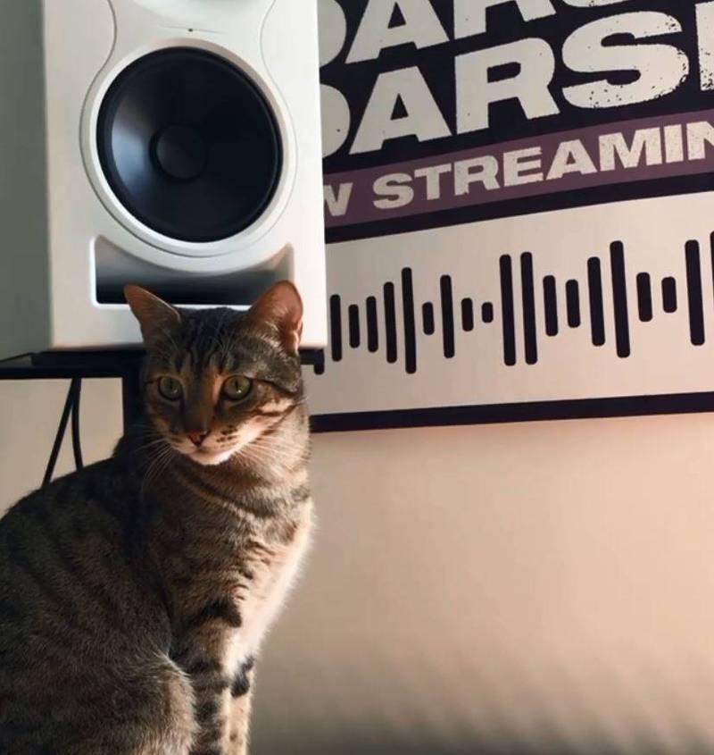 魯普為貓特拉樂團的主唱,魯普的飼主安娜表示,樂團發的首張單曲所得將全數捐給流浪貓機構。(圖擷取自catteranyc ig)