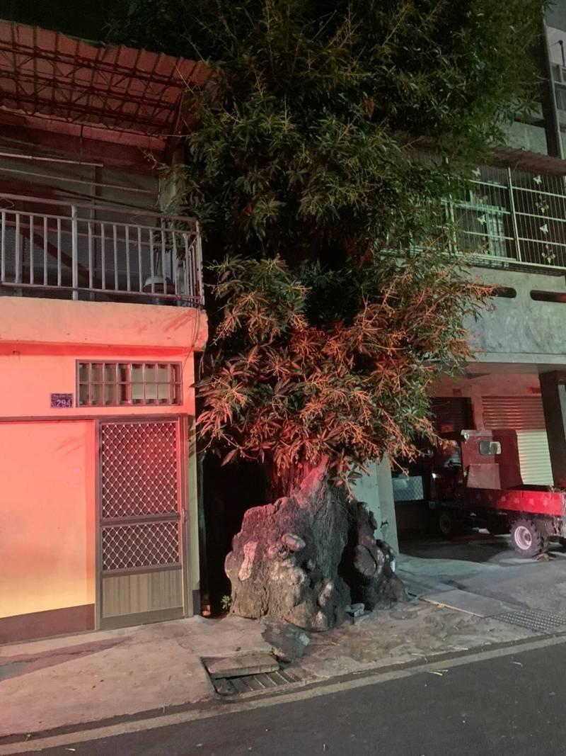 彰化二水9日凌晨發生民宅火警,緊鄰民宅5公尺的305年芒果樹公險遭祝融。(記者陳冠備翻攝)