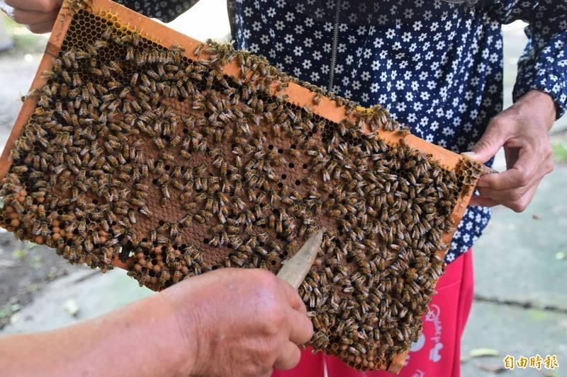 黃姓男子在公寓頂樓養蜂螫傷鄰居,但多數住戶都同意他養蜂且不認為蜜蜂是危險動物。示意圖。(資料照)